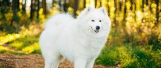 Пес на лесной тропинке