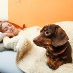 Собаки для квартиры: обзор лучших пород