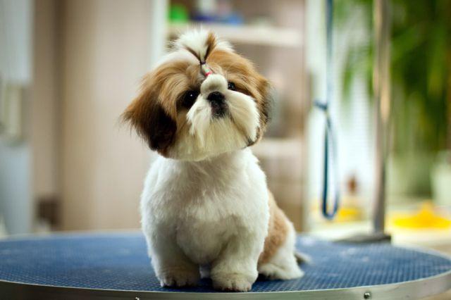 Собака на подставке