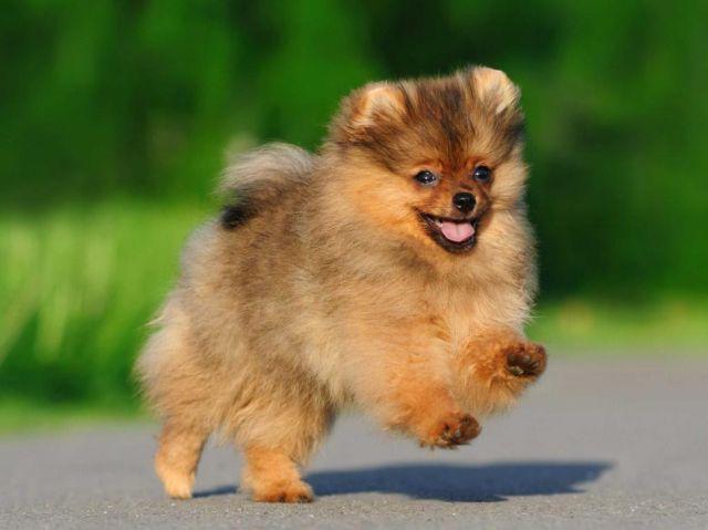Пес бежит по дорожке