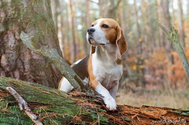 Собака стоит на дереве