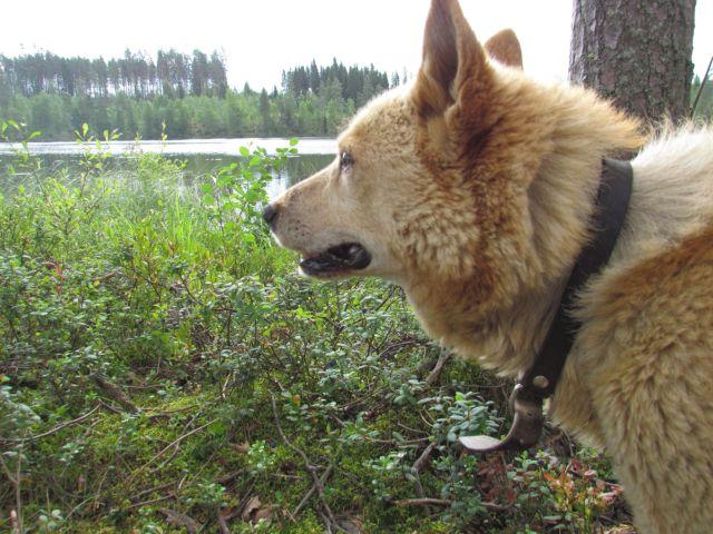 Пес на берегу озера