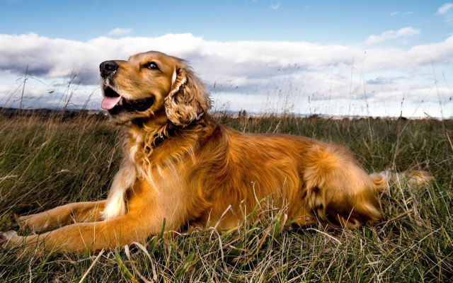 Пес лежит в траве