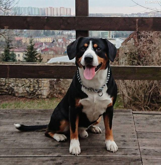 Собака на террасе