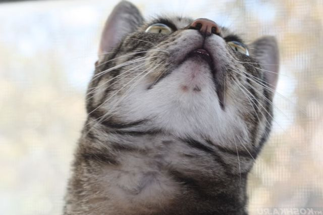 Кот смотри вверх