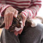 Как лечить акне у кошек