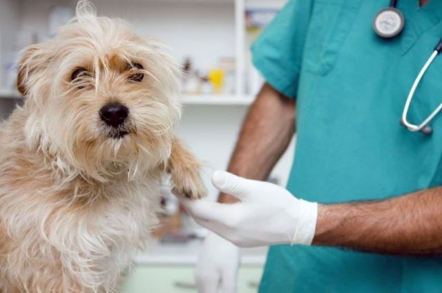 Ветеринар осматривает лапу
