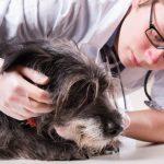 Обзор болезней опорно-двигательного аппарата у собак