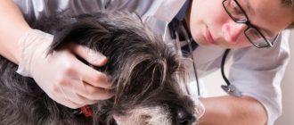 Врач обнимает собаку