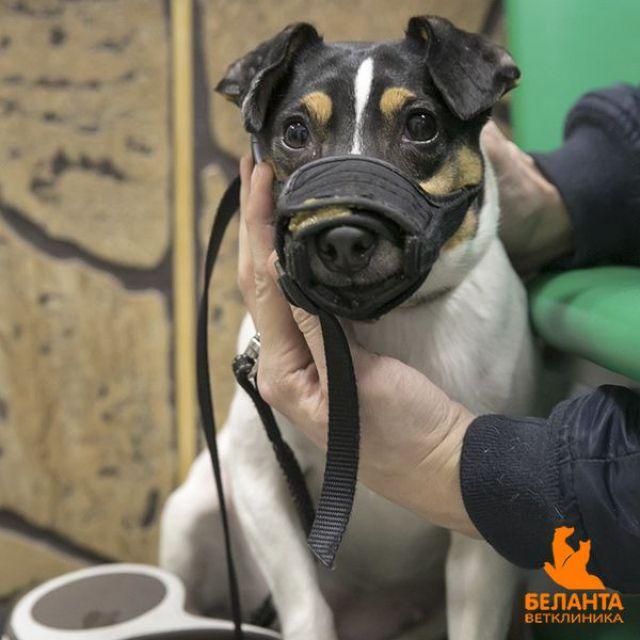 Расстройство желудка у собаки
