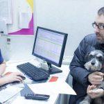 Частые болезни желудочно-кишечного тракта у собак