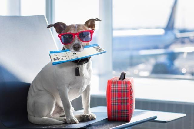 Собака с билетом в зубах