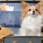 Оформление документов для выезда за границу с собакой