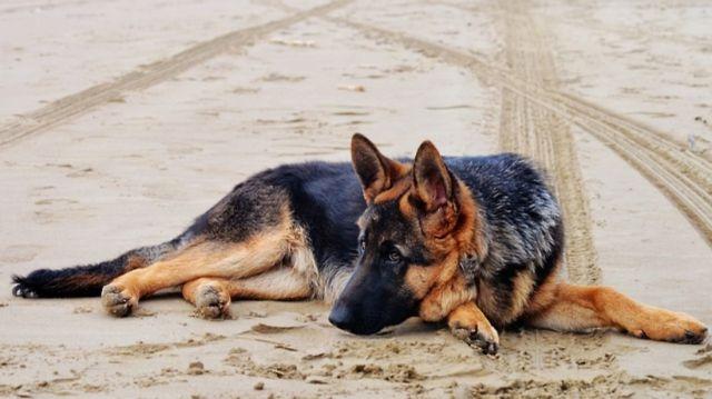 Пес на песке