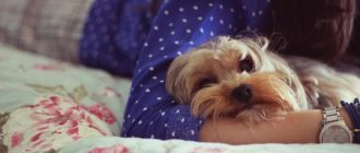 Собака с женщиной на кровати