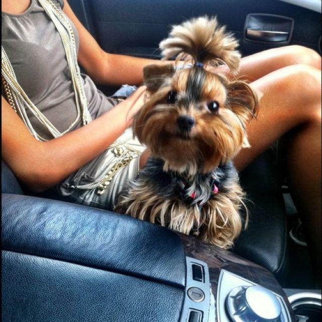 Женщина в машине с собакой