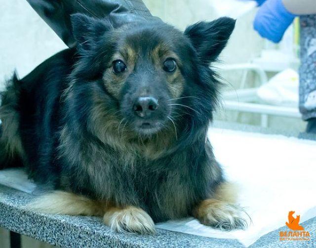 Эпителиотропная лимфома у собак в москве