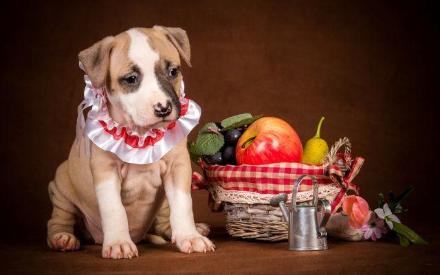 Пес корзинкой фруктов