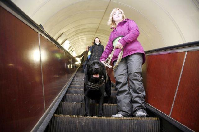 С собакой на эскалаторе