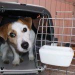 Правила перевозки собак в метрополитене