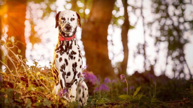 Собака в лесу
