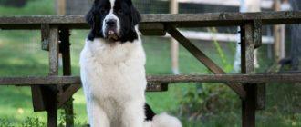 Пес сидит у ограды