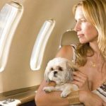 Как правильно перевозить собак в самолете