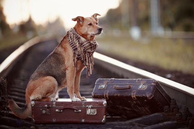 Собака с чемоданами