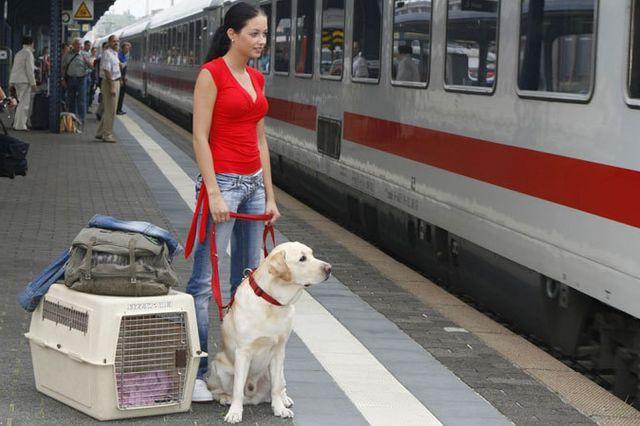 Девушка с собакой на перроне