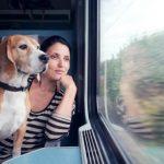 Как перевозить собак в поездах дальнего следования