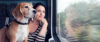 Пес смотрит в окно