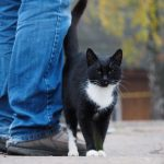 Пути заражения токсоплазмозом у кошек