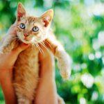Как избавить котенка от глистов