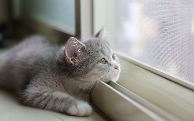 Кот лежит у окна