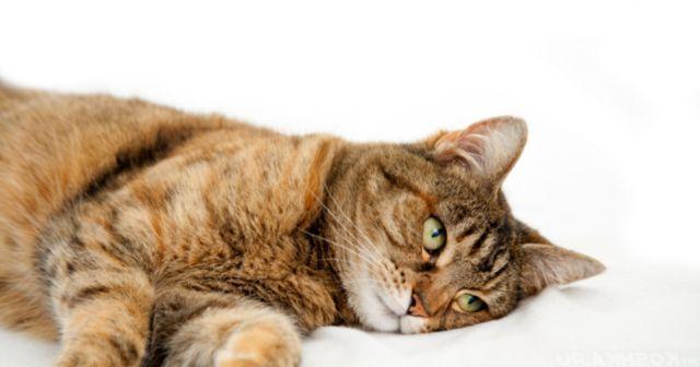 Кот лежит на боку