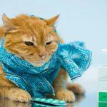 Чем опасен хламидиоз у кошек