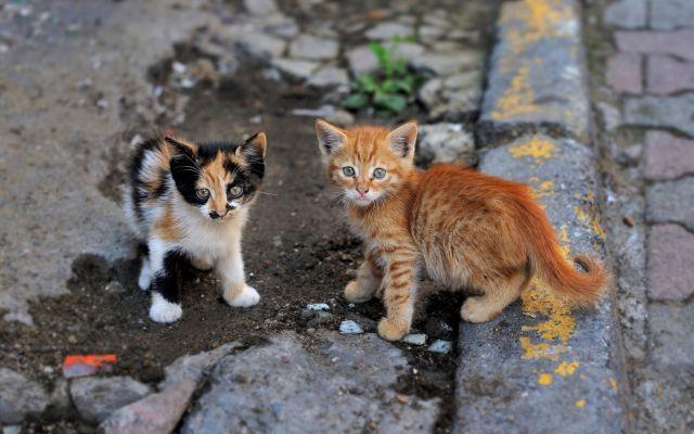 Два котенка на дороге
