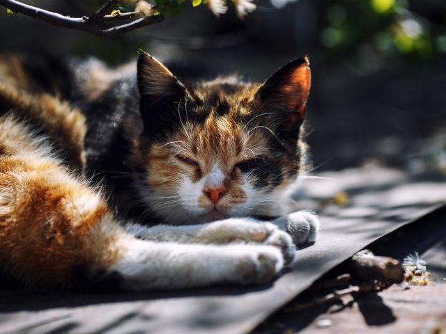 Котенок спит на скамейке