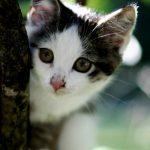 Лечение конъюнктивита у котят: признаки болезни, её последствия