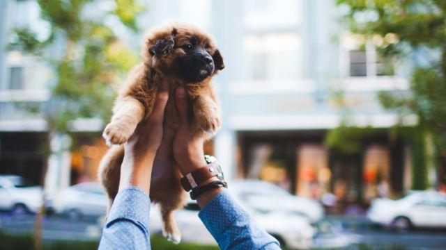 Женщина держит щенка