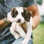 У собаки – крипторхизм, как поступить?