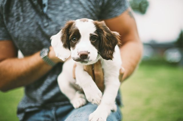Мужчина держит щенка