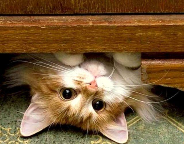 Котенок под шкафом
