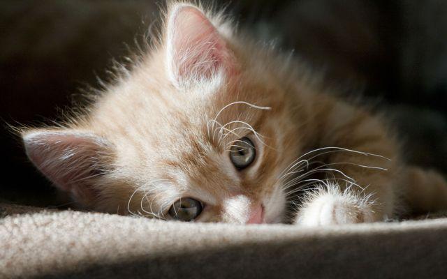 Котенок лежит на диване