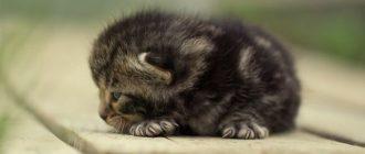 Маленький котенок на досках