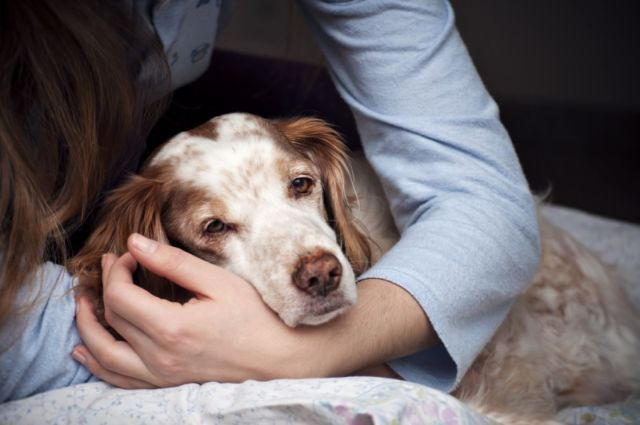 Женщина обнимает пса