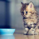 Если у котёнка понос