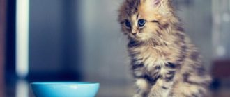 Котенок рядом с миской