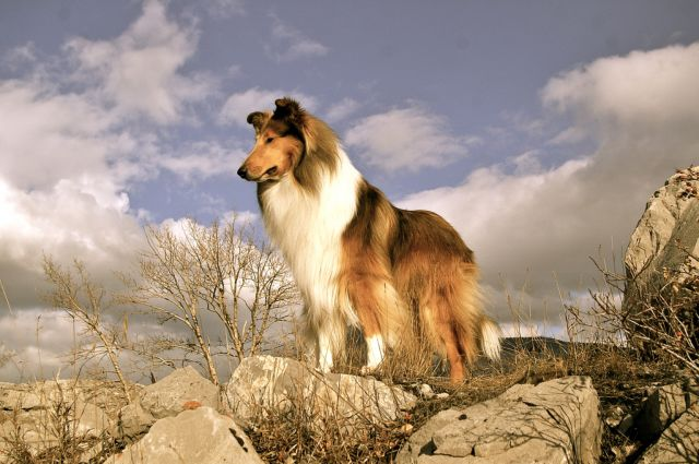 Собака на камнях