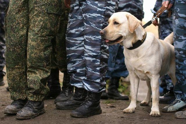 Собака с военными